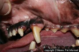 rabies virus and rabies disease in animals and humans