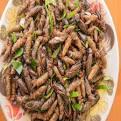 Manfaat, daun Kelor : Resep Masakan Khas