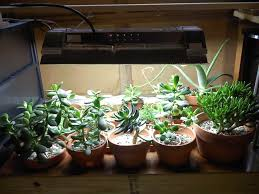 Succulent Grow Light Setup The Complete Guide To Grow Lights For Succulents Sublime