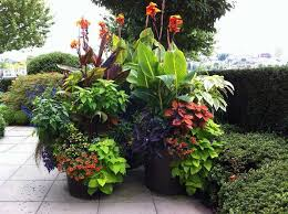 Small Picture Best Of Small Garden Design Sydney Garden Design Seaforth Pictures