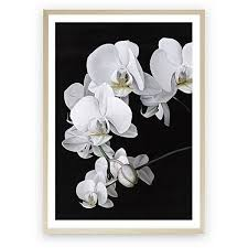 orchid framed art print 105 060 idr liked on polyvore featuring home home decor wall art framed wall art and orchid wall art polyvore pinterest  on white orchid framed wall art with orchid framed art print 105 060 idr liked on polyvore featuring