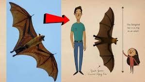 इंसानों जितना बड़ा चमगादड़ देख सहमे लोग, जानिए वायरल फोटो की सच्चाई | Human  Sized Bat photos viral on social media truth behind this Pic - Hindi  Oneindia