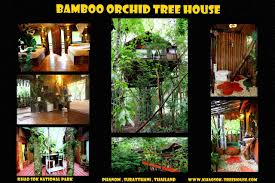 Tours In Khao Sok Thailand  Elephant Trek Jungle Walk Bird Khao Sok Treehouse