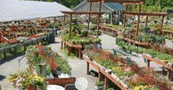 garden centers in ma. Delighful Garden Chelmsford To Garden Centers In Ma O