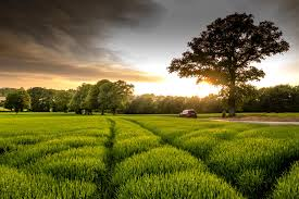 2020 - Teagasc Forest Photo Competition - Trees on the Farm - Teagasc |  Agriculture and Food Development Authority