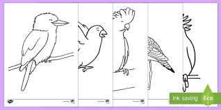 Small Picture Australian Birds Colouring Pages Australian Curriculum