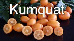 How To Grow Kumquats IndoorsKumquat Tree Not Bearing Fruit