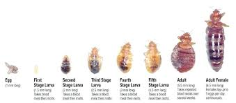 bugs in my bedroom bed bug little bugs that fly in bedroom bugs in my bedroom