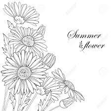花束はカモミールの花芽と葉は白い背景で隔離を概説します華やかなフローラルな夏デザインと塗り絵