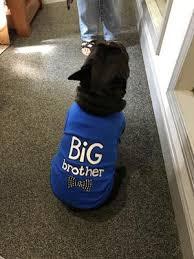 Parisian Pet Dog Clothes Big Brother T Shirt Walmart Com