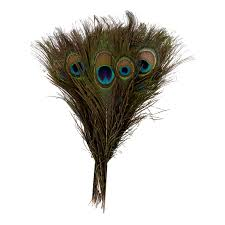 Image result for images of peacock feathers bunch