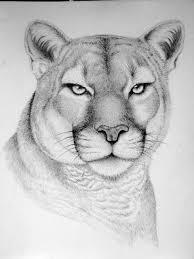 wild horse drawings in pencil. Modren Wild Wild Horse Drawings In Pencil  Google Search Throughout Wild Horse Drawings In Pencil