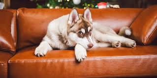 best leather couch for dogs top pet