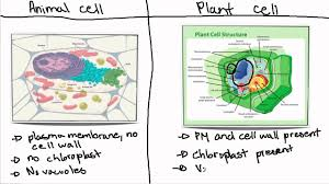 stem cell essays engineering human fat to heal hearts and joints  plant cell essay plant and animal cell essay 91 121 113 106 function of plant cells