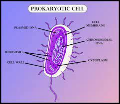 diffeiate between prokaryotic and