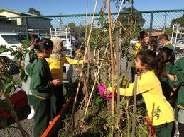 The Stephanie Alexander Kitchen Garden National Program Reeya Wooranna Park Ps Year 3 2013