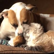 dog and cat love each other. Plain Other Just To Brighten Everyones Day A Tiny Bit Have This Gif Of Greta And Elle  My Parentu0027s Dog Cat Who Are In Love With Each Other On Dog And Cat Love Each Other 0