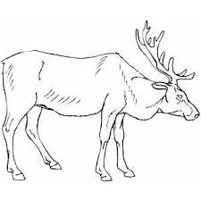 Small Picture Elk Coloring Page