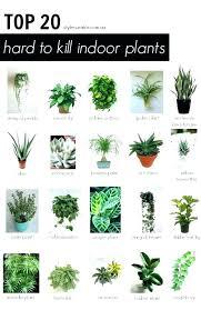 house plants low light best low light office plants good office plants superb best indoor office