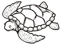 Small Picture Sea Turtle Coloring Page Realistic Sea Turtle Coloring Page