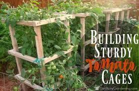 Diy tomato cage Wire Building Sturdy Tomato Cages Get Busy Gardening Building Sturdy Tomato Cages Get Busy Gardening