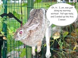 how do i keep rabbits out of my garden. Brilliant Rabbits Keep Rabbits Out Of Yard Rabbit Away From Garden How Do I  And My Pinterest
