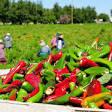 Population losses add to farm, ranch labor shortage