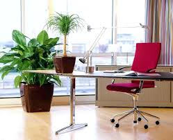 feng shui home office attic. Feng Shui Plant Office. Home Office Enchanting Plants Furniture Regarding Dimensions 1024 X Attic