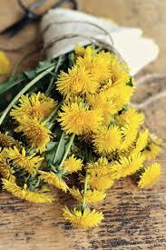 Dandelion Muffins | Одуванчики, Цветы и Пионы