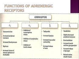 Adrenergic Receptors Chart 8 Alpha Beta Adrenergic Receptors Chart Adrenergic
