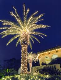 lighted palm tree outdoor lighting perspectives