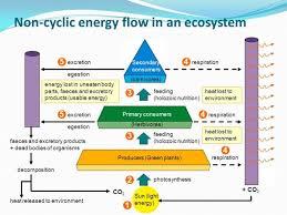 Ecosystem Pyramid Chart Www Bedowntowndaytona Com