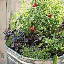 balcony vegetable garden stunning container vegetable garden design ideas tips balcony balcony vegetable garden ideas india