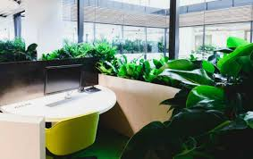 office indoor plants. Office Indoor Plants Gallery O