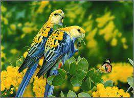 love bird hd widescreen desktop ...