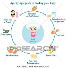 Clip Art Of Feeding Baby Infographics K36752667 Search Clipart