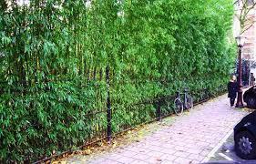 Small Picture Garden Design Garden Design with Island Bamboo Garden Photos