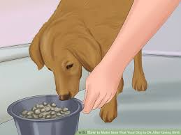 image led make sure that your dog is ok after giving birth step 5