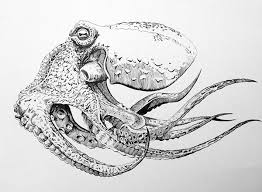 Small Picture Pen and Ink Octopus on Behance Art Pinterest Behance
