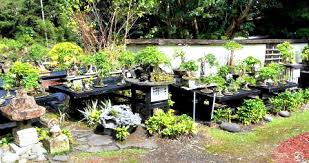 bonsai gardens. co-sponsored by the mid-pacific bonsai foundation, fuku-bonsai, is a working certified nursery with large inventory. many folks take workshop gardens