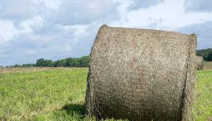 Round Bale Weight Chart Weighing In On Bale Weights Hay And Forage Magazine
