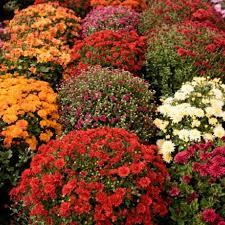 Imagini pentru flori fascinante de primavara
