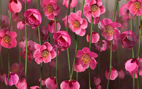 Flower Wallpaper 12 - WideWallpaper ...