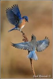 Αποτέλεσμα εικόνας για pictures of landscapes ANIMALS