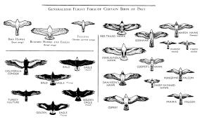 Bird Size Chart 27 All Inclusive Bird Size Comparison Chart