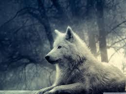White Wolf Painting 4k Hd Desktop Wallpaper For 4k Ultra