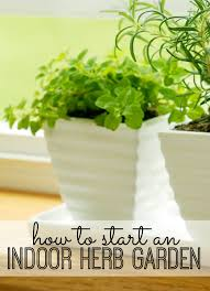 starting an indoor herb garden at home requires a little planning a lot of sunlight