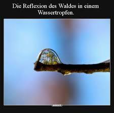 Die Reflexion Des Waldes In Einem Wassertropfen Lustige Bilder