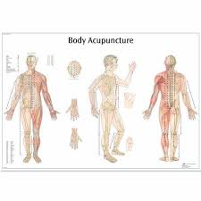 Body Acupuncture Chart Vr1820l 21 00 Pt United Add