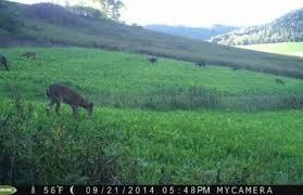 Deer Feeding Times For Monster Bucks Whitetail Habitat